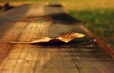 Едно листо на пейка в парка