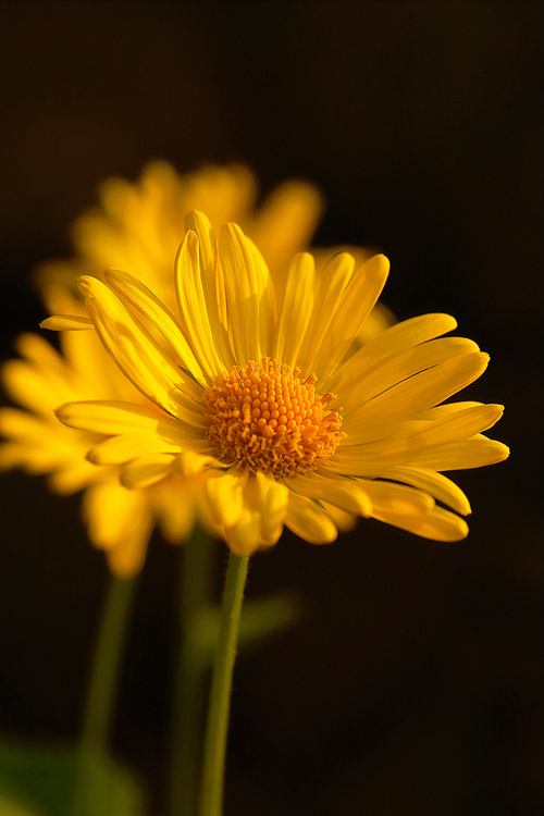 Жълто 9