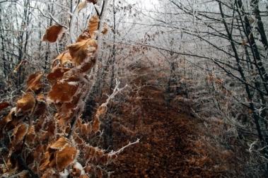 През заскрежената гора