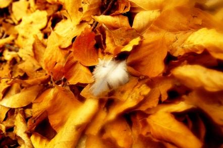 Жълти и бели пера