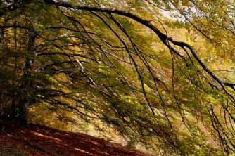 Дългият клон на дървото