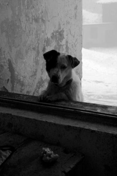Кучето и хлябът