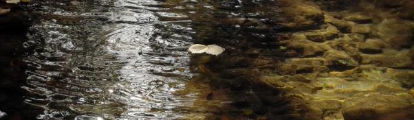 Реката с две лица