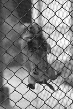 Sofia Zoo