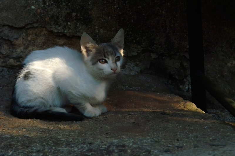 Очите на котето винаги подкупват с глад