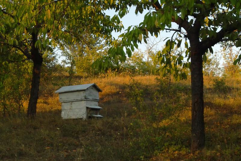 Пчелите жужат мед.