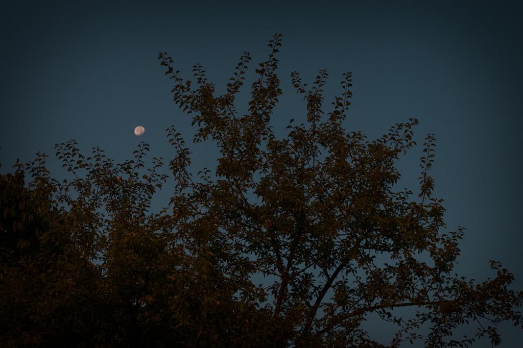 Безоблачната луна правеше нощите ни светли като ден.