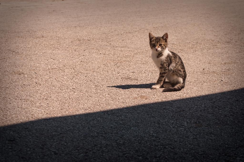 Котките веднага надушват чужденеца в нас и ни се лепват.