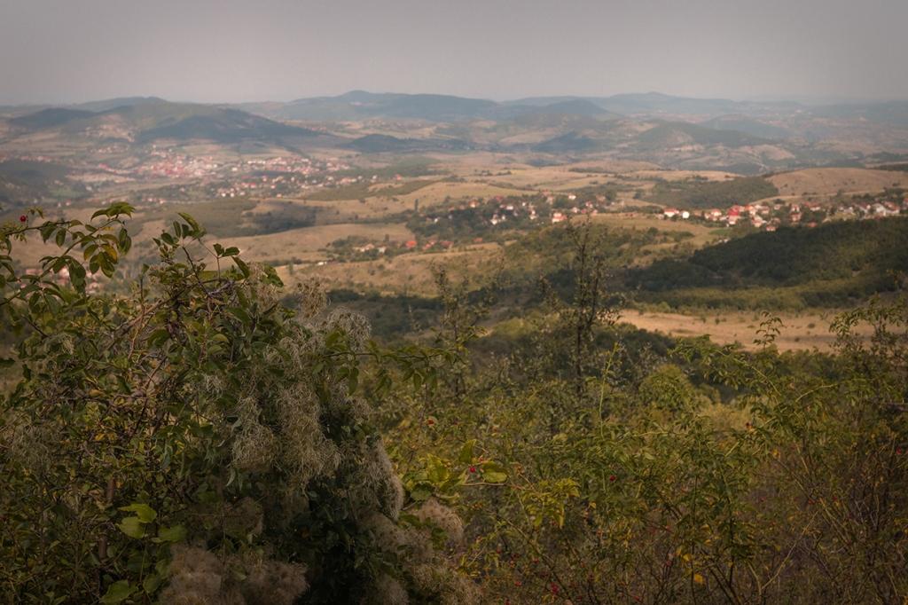 По пътя между Яворово и махала Чеганци.